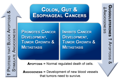 Table1_Colon_Gut_andEsphagealCancers